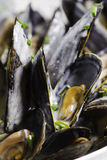 Macro mussel Stock Photos