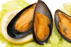 Macro mussels Stock Images