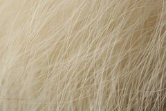 Macro natural de la piel de Fox de Artco Imágenes de archivo libres de regalías