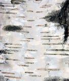 Macro natural del fondo de la textura de la corteza de abedul Imagenes de archivo