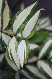 Macro, naturaleza, hoja, verde, fondos, crecimiento, biología, prado, belleza en la naturaleza, planta, primer, Fotografía de archivo libre de regalías