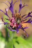 Macro nature Stock Images