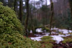Macro Nature Photography of Moss Covering a Rock in the Deep Woods. Macro Nature Photography of Moss Covering a Stone in the Deep Woods Stock Photo