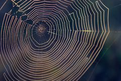 Macro Nature Photography of a Natural Spider Web with a Blurred Forest Background. Stock Image