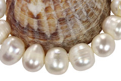 Macro necklace from pearls and a mollusk shell on a white backgr. Ound Royalty Free Stock Images