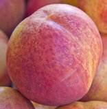Macro nectarine Stock Image