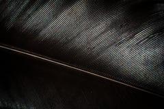 Macro negra de la pluma del pollo Imagen de archivo