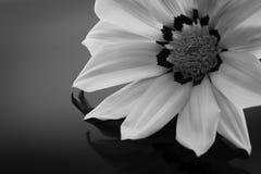 Macro negra y blanca Fotos de archivo libres de regalías