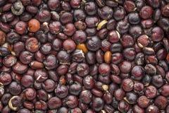 Macro nera del grano della quinoa Fotografia Stock