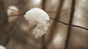 Macro, nieve en la rama en el parque almacen de video