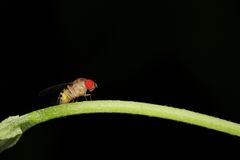 Macro Of A Red Eyed Fly Royalty Free Stock Image