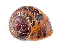 Free Macro Of Beautiful Abandoned Snail Shell Stock Photos - 45872253