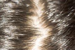 Free Macro Of Hair Royalty Free Stock Images - 54762379