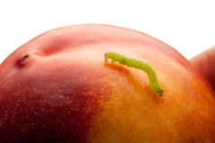 Macro Of Measuring Worm On Nectarine Royalty Free Stock Images
