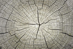 Free Macro Of Tree Cross Section Background Stock Photography - 40804402