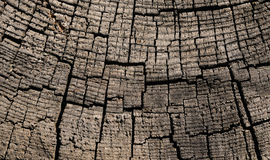 Macro of old stump. Stock Image