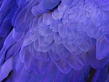 Free Macro On A Hyacinth Macaw Feathers Stock Images - 107488274
