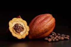 Macro of open cocoa pod. On dark brown surface Stock Image