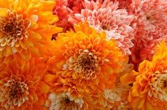 Macro of orange aster flower Stock Photos