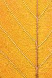 Macro orange de feuille Images stock