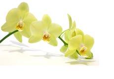 Macro orchidée verte Photos stock