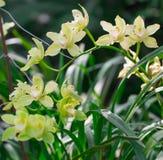 Macro orchids in botanical garden. Royalty Free Stock Photos