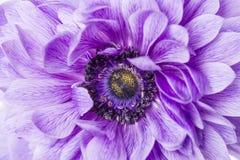Macro púrpura de la flor imagen de archivo