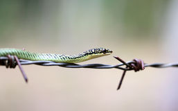 Macro palm snake Stock Photos