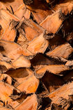 Macro of a Palm Tree Trunk Stock Images