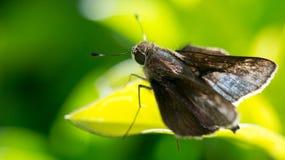 Macro papillon Photographie stock libre de droits