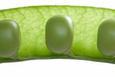 Macro of peas in open pod Stock Image