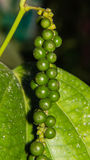 Macro Pepper on the tree Stock Photo