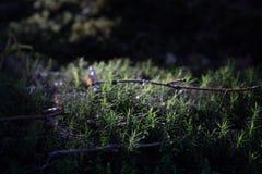 Macro pequeno do musgo na floresta profunda Imagens de Stock