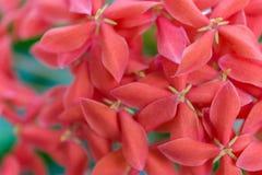 Macro petit groupe d'un groupe de fleurs roses Image stock