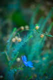 Macro petite Azure Flower Botanical Green Summer bleue photographie stock