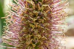 Macro photo agave leaves  in Spain. Lloret de Mar Stock Image
