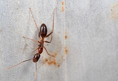 Macro Photo of Ant on The Wall with Space. Macro Photography of Ant on The Wall with Space royalty free stock image
