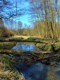 Macro photo avec le fond de paysage d'une rivière de forêt et une végétation et des arbres d'Européen Image libre de droits
