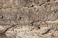 The bark of an acacia tree Stock Photos