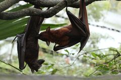 Close up image of bats royalty free stock image