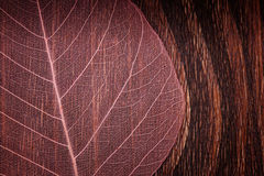 A macro photo of a beautiful pink see-though leaf on a wood Royalty Free Stock Photo