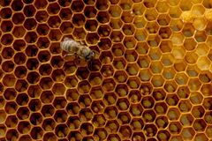 Macro photo of a bee hive on a honeycomb with copyspace. Bees produce fresh, healthy, honey. Beekeeping concept