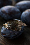 Macro photo blue plum with a dry leaf Royalty Free Stock Image