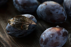 Macro photo blue plum with a dry leaf Royalty Free Stock Photos
