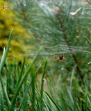 Macro photo with blurred background of forest green, spider and cobwebs in the glare of sunlight Royalty Free Stock Images
