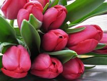 Macro photo of a bouquet of vibrant colors of tulips with petals of dark pink hue. As the source for design, decoration, posters, advertising, decoration, photo Royalty Free Stock Photography