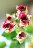 Macro photo bush mottled red rose Stock Image
