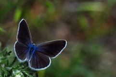 Macro photo of butterfly Stock Image