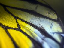 Macro photo of a butterfly wing royalty free stock photos