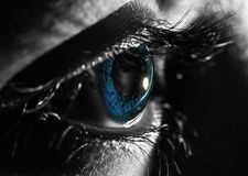 Macro photo of close up shot of blue eye. black and white selective coloration.  Royalty Free Stock Image